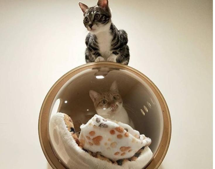 Ces superbes maisonnettes inspirées des capsules spatiales vont ravir vos chats Screen20