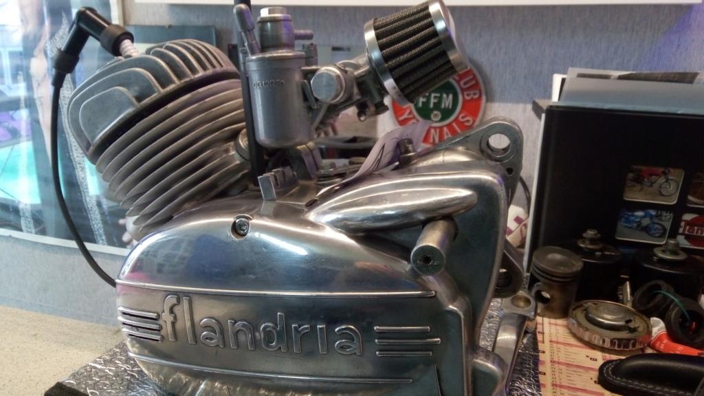 FLANDRIA P_202150