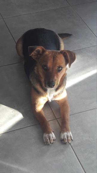 Freya - femelle - refuge de Arad - réservée adoption (39) 20181130