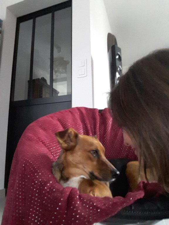 Freya - femelle - refuge de Arad - réservée adoption (39) 20181131