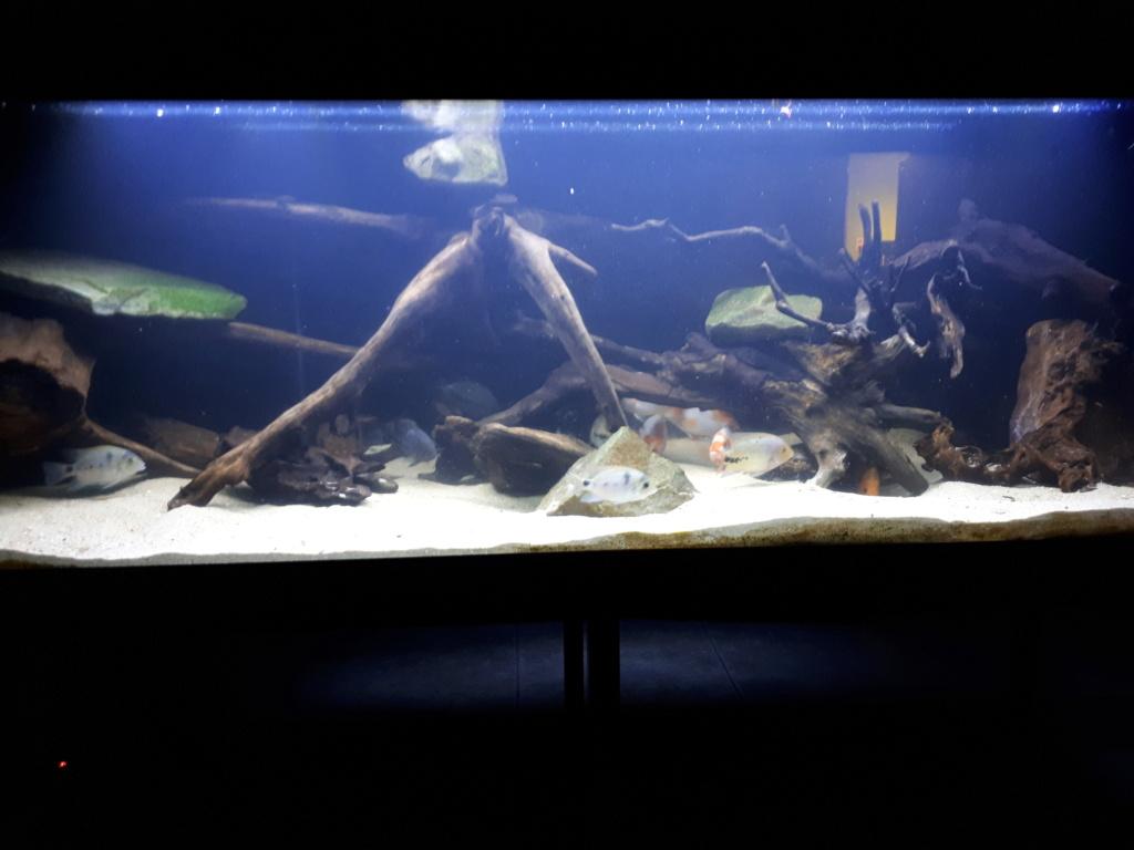 mon aquarium AMC ( 1000L ) 20190210