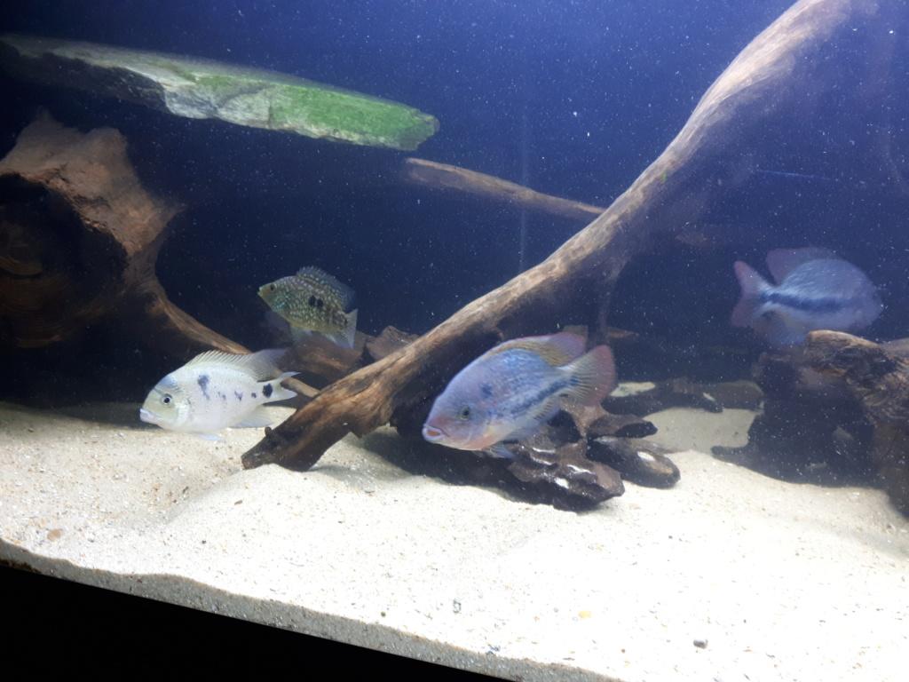 mon aquarium AMC ( 1000L ) 20190211