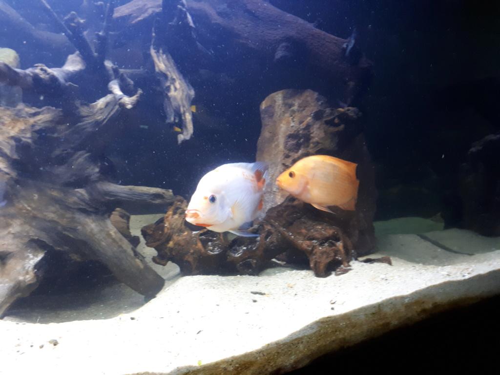 mon aquarium AMC ( 1000L ) 20190213