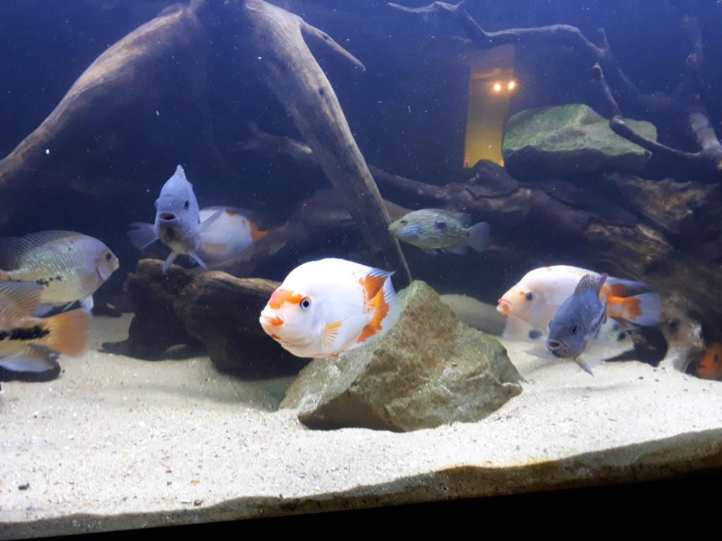 mon aquarium AMC ( 1000L ) 20190214