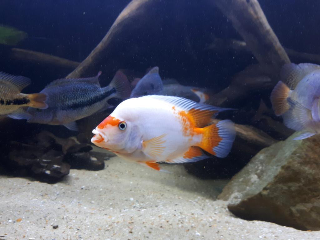 mon aquarium AMC ( 1000L ) 20190216