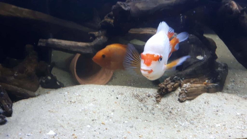 mon aquarium AMC ( 1000L ) Receiv10
