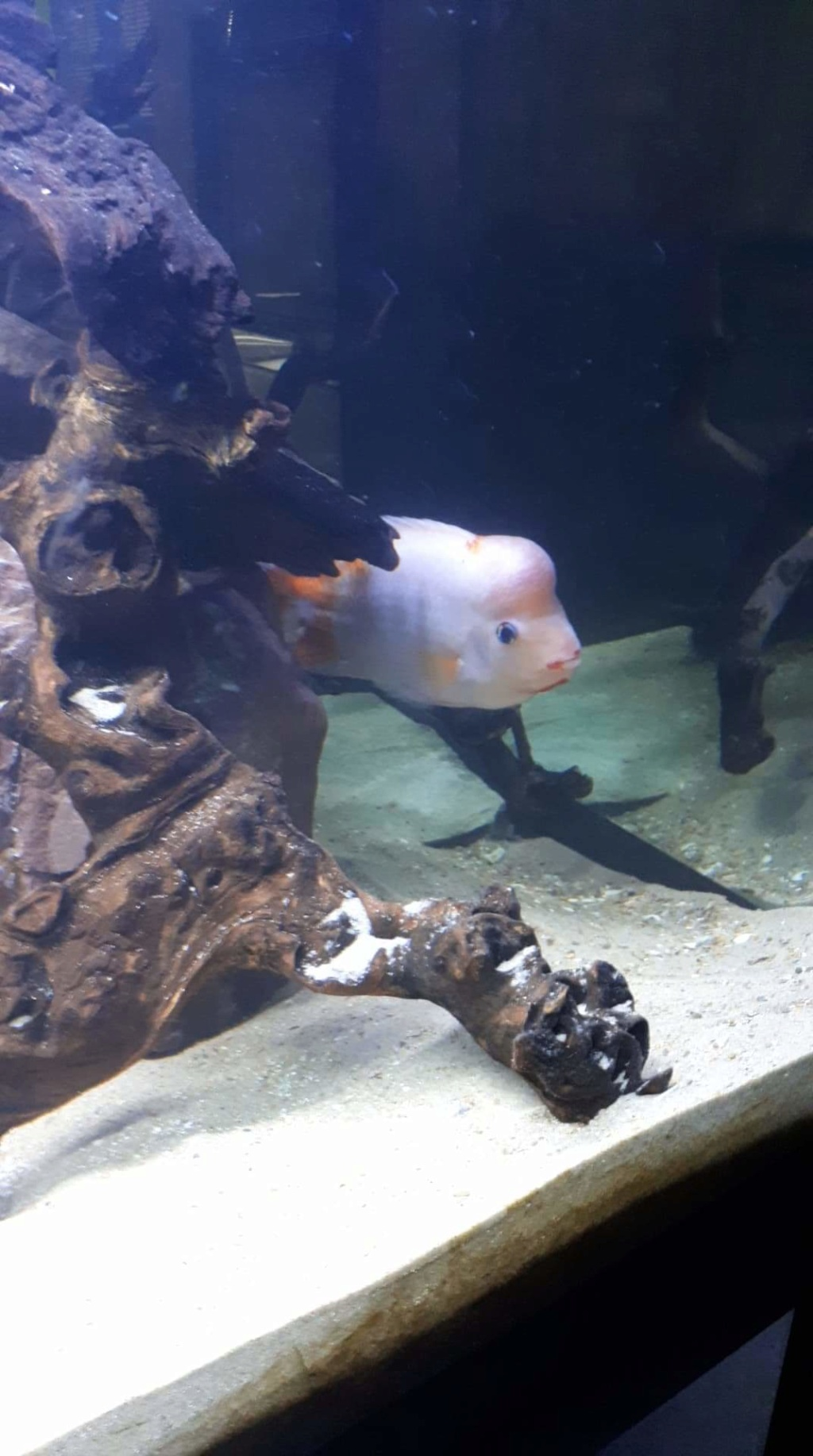 mon aquarium AMC ( 1000L ) Receiv14