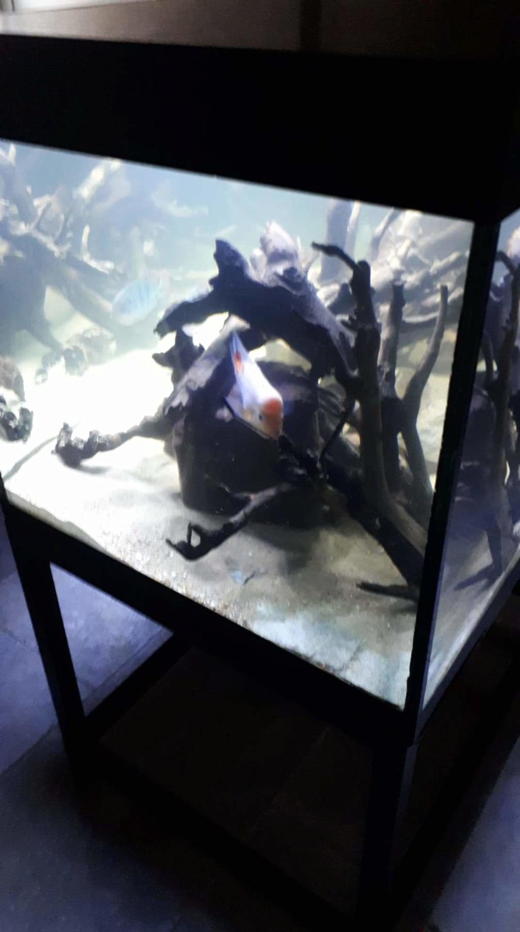 mon aquarium AMC ( 1000L ) Receiv15