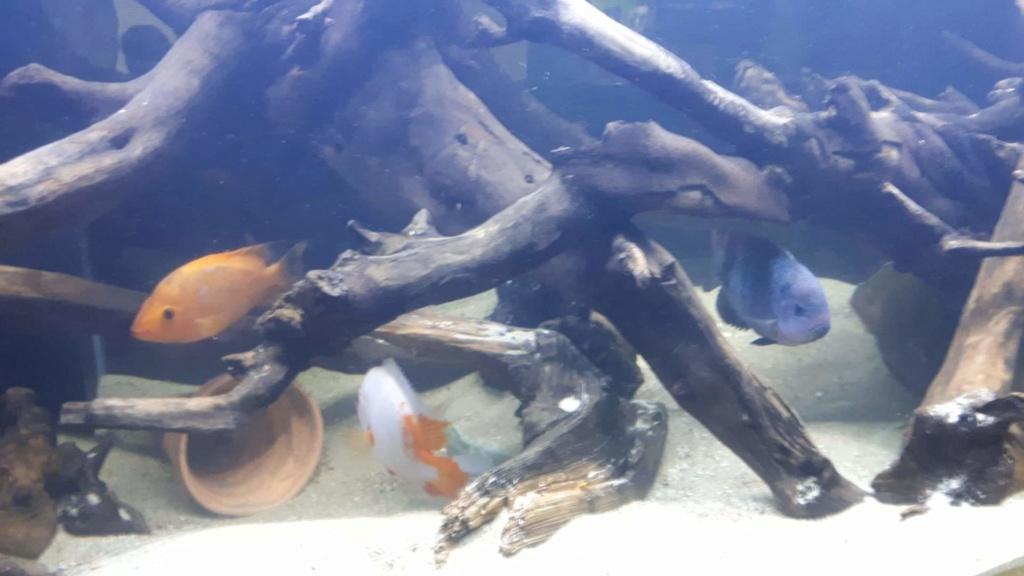 mon aquarium AMC ( 1000L ) Receiv17