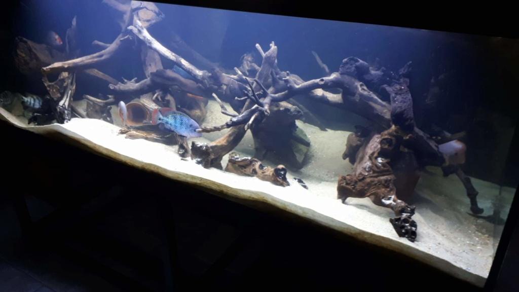 mon aquarium AMC ( 1000L ) Receiv18