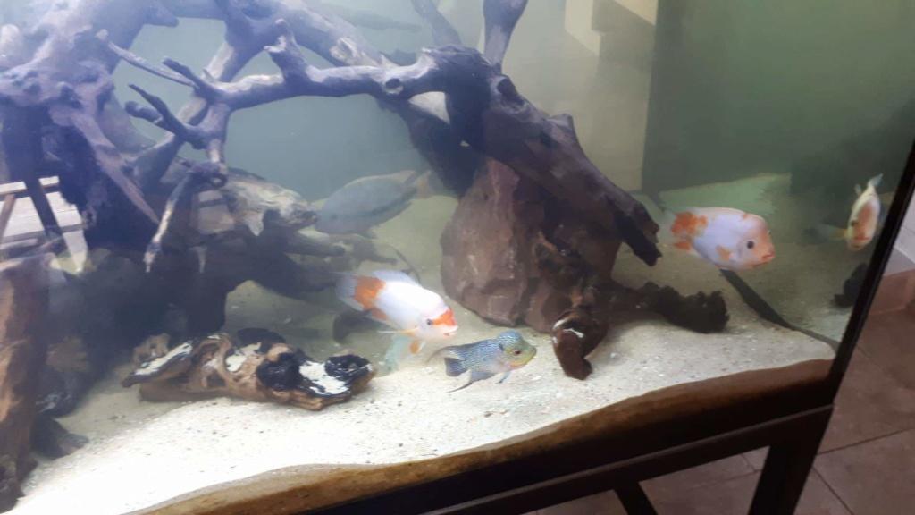 mon aquarium AMC ( 1000L ) Receiv19