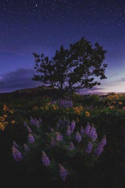Звёздное небо и космос в картинках - Страница 9 15765123
