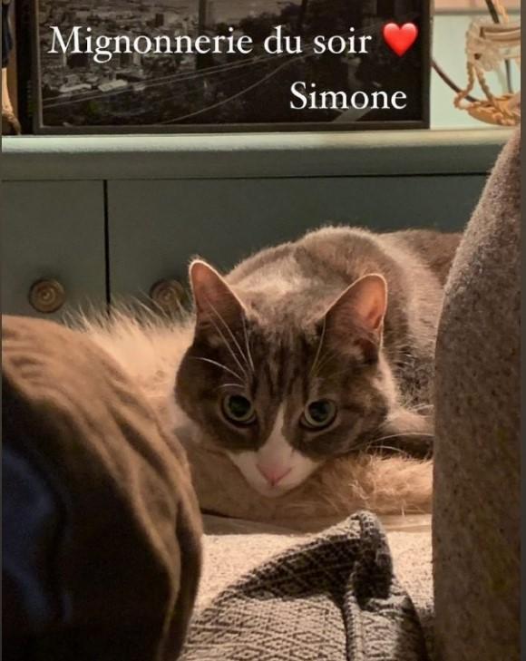 SIMONE (Sweet)   Scree151