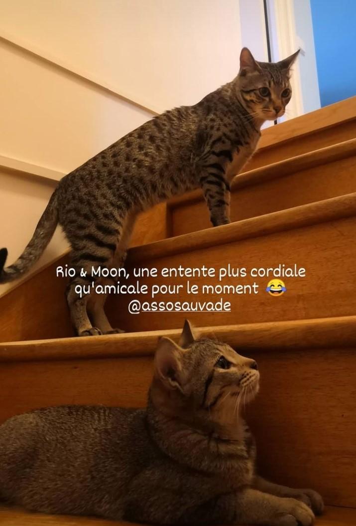 MOON (Mona) Scree260