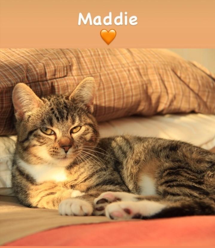 MADDIE et MILO Screen50