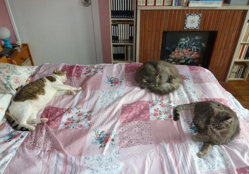 Duo de chats jardiniers! - Page 21 P1070643