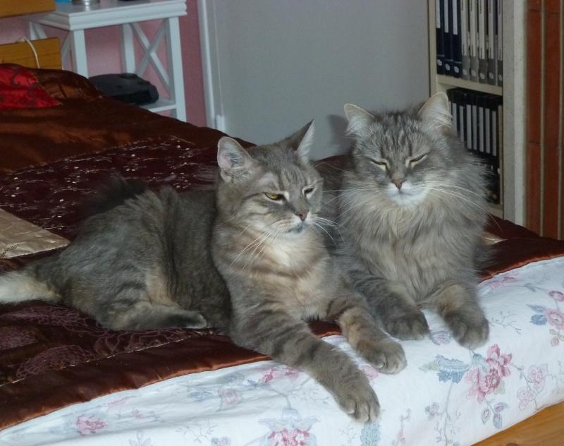 Duo de chats jardiniers! - Page 21 P1080050