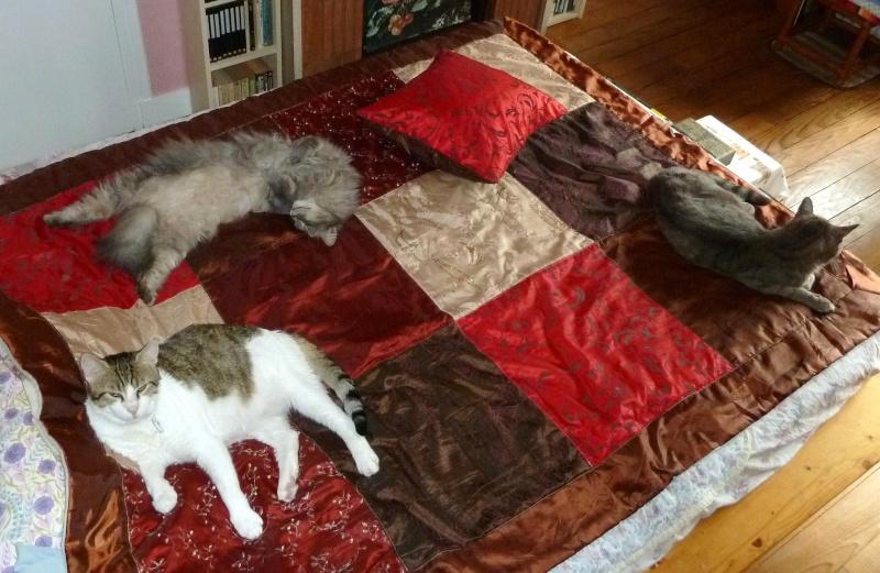 Duo de chats jardiniers! - Page 21 P1080114