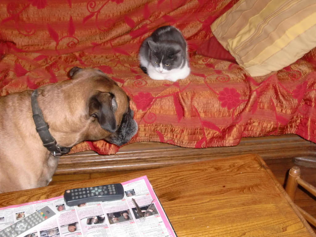 Photos et vidéos de vos animaux ! - Page 33 Cimg0610