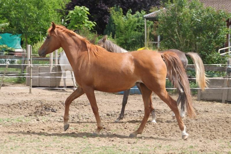 AL MAHDIYA ANTALLIAH 4 ANS ps ARABE- 1500 euros 222210