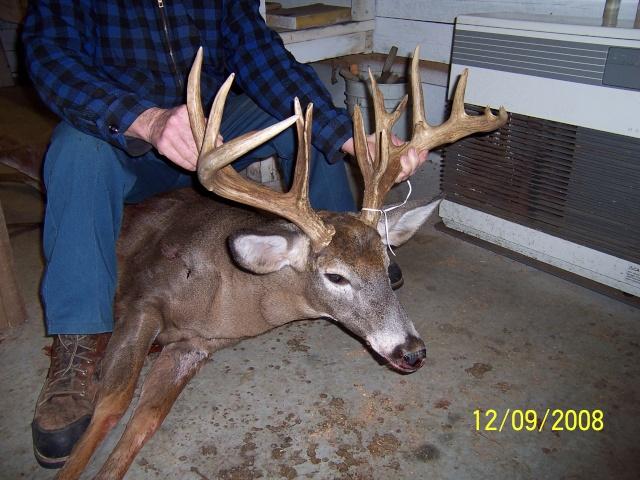 Beau Buck du Maine 100_1011