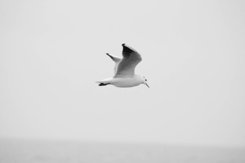 mouette Img_0913