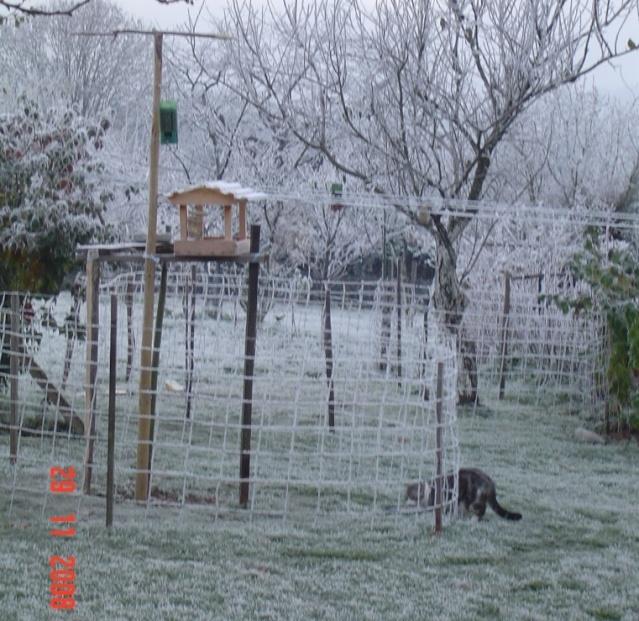 Nourrissons les oiseaux Dsc02313