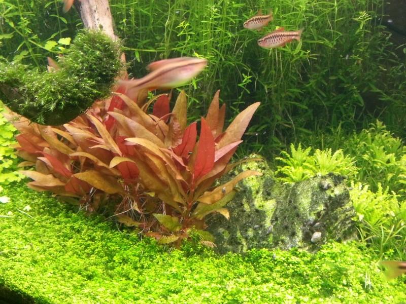 Mon Rio 180 litres, futur aquarium communautaire - Page 3 20130710
