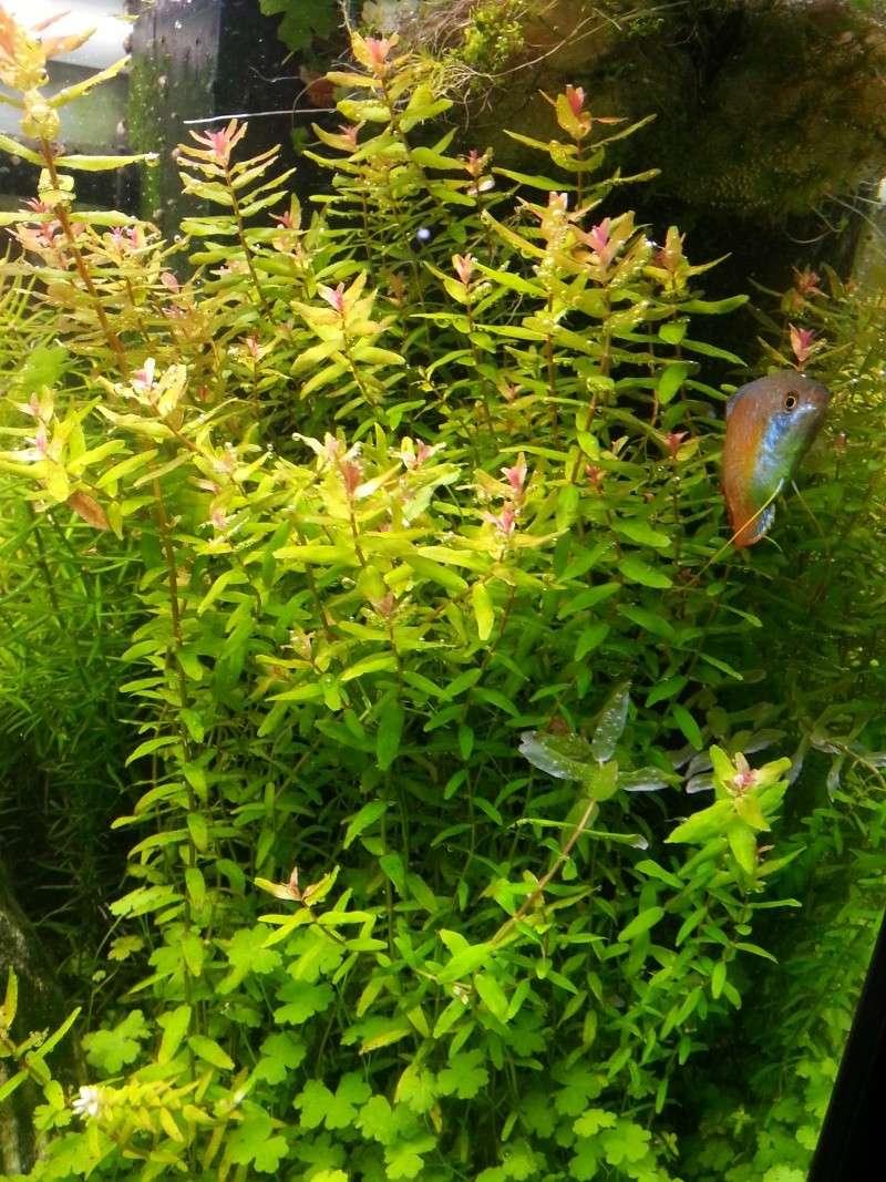 Mon Rio 180 litres, futur aquarium communautaire - Page 3 20130712