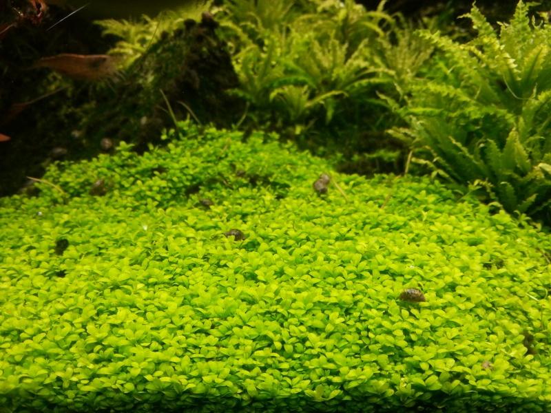 Mon Rio 180 litres, futur aquarium communautaire - Page 3 20130811