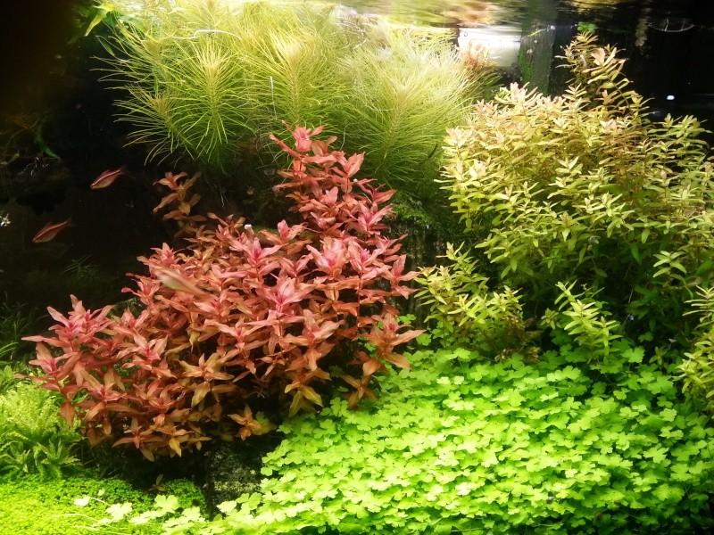 Mon Rio 180 litres, futur aquarium communautaire - Page 3 20130812
