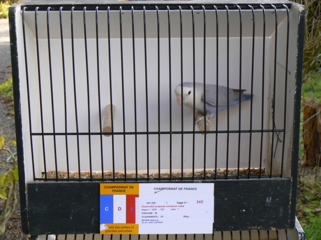Prix à Cambrai P1060213