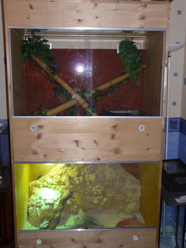 mes terrariums Crotte11