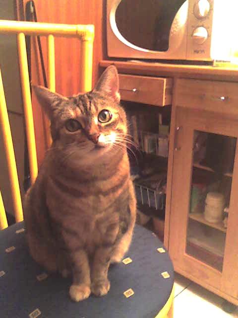 mon adorable petite chatte Z_ophe10