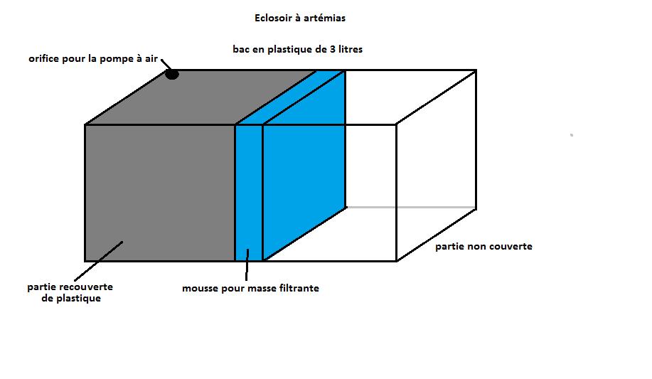 mon projet de mini élevage de betta, conseils et aide Ecloso10