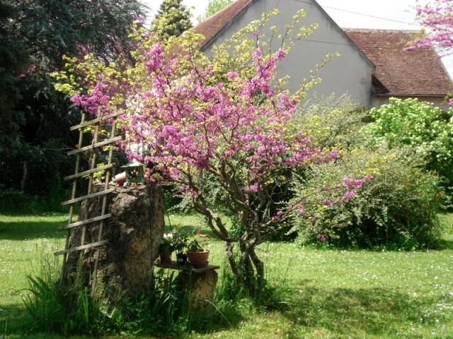 le nouveau jardin de Giroflée - Page 2 008min10