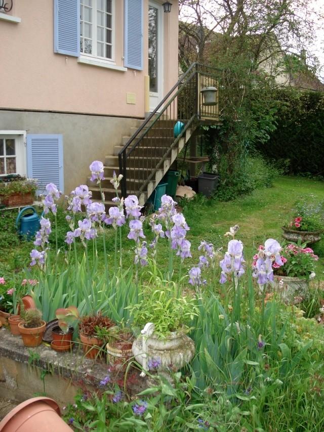 le nouveau jardin de Giroflée - Page 2 00mini14