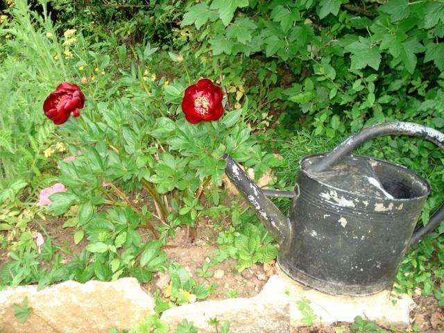 le nouveau jardin de Giroflée - Page 3 00mini15