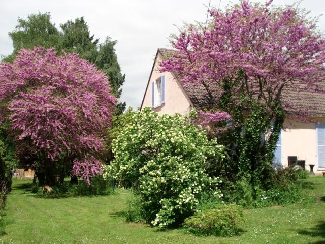 le nouveau jardin de Giroflée - Page 2 0mini010
