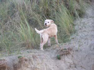 AGRIKA à la plage (13 novembre 2008) + vidéo Agri-d10
