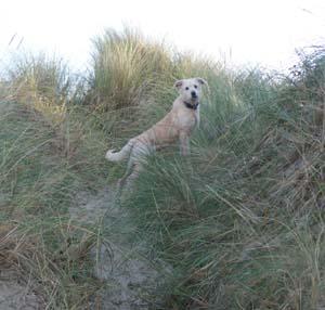 AGRIKA à la plage (13 novembre 2008) + vidéo Agri-d11