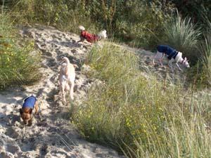 AGRIKA à la plage (13 novembre 2008) + vidéo Agri-d12