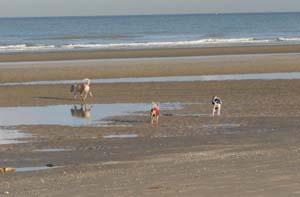 AGRIKA à la plage (13 novembre 2008) + vidéo Agri-p10