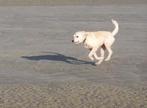 AGRIKA à la plage (13 novembre 2008) + vidéo Agri-p12