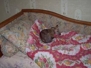 Les nouvelles de CANNELLE (1er décembre 2008) Can-ca11