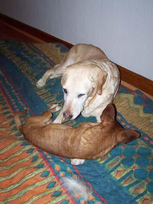 DALTON joue avec JULIE (10 novembre 2008) Da-10