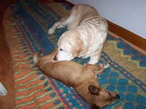 DALTON joue avec JULIE (10 novembre 2008) Da-ave11