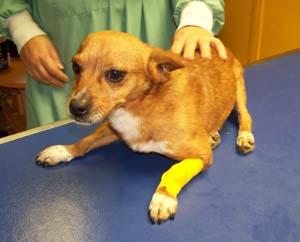 DALTON a vu le vétérinaire (3 novembre 2008) Da-per10