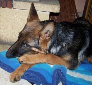 La convalescence de DYNA (14 décembre 2008) Dy-os-12