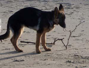 DYNA à la plage (7 décembre 2008) Dy-pla10
